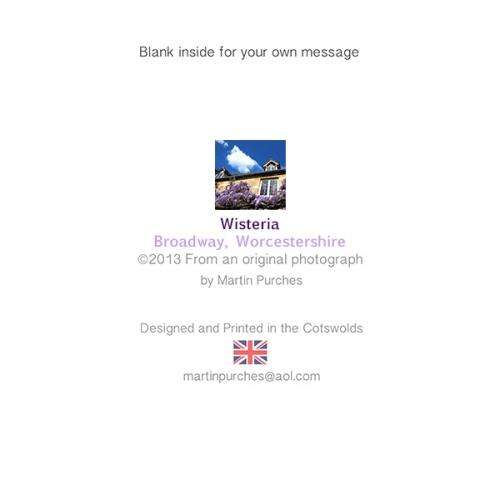 Wisteria2_back