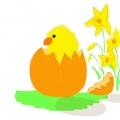 Chick-web