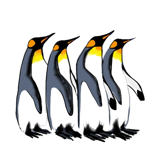 King-Penguin-web